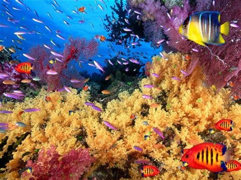 Animated Coral Reef Wallpaper - aquarium animated wallpaper collection