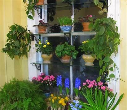Garden Window Creative Chores February Houseplants September