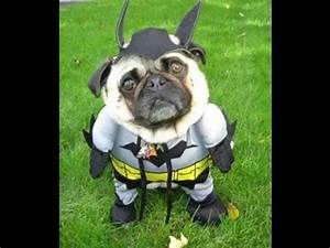 Funny Dog Costumes Halloween 2014: Find a Funny Halloween ...