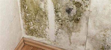 probleme moisissure chambre nettoyer les moisissures sur un mur remèdes de grand mère