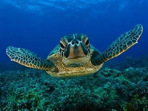 Cute Turtle Wallpaper Photos Wallpaper | WallpaperLepi