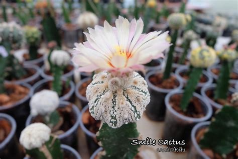 Smile Cactus แคคตัสหัวหิน - Home | Facebook