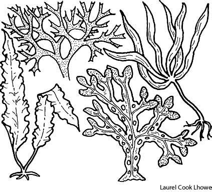 Coloring Definition by 27 Best Seaweed Images On
