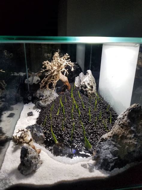 Fluval Edge Aquascape by Fluval Edge 6 Gallon Bonsai Aquascape Aquascaping