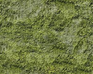 Wet Moss Texture Seamless 13160