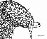 Turtle Sea Coloring Adult Trapped Drawing Sketch Credit Larger sketch template