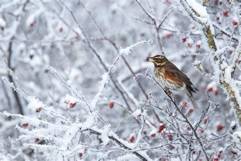 expert guide  photographing winter birds amateur