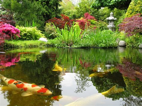 japanese koi pond wallpapers top  japanese koi pond