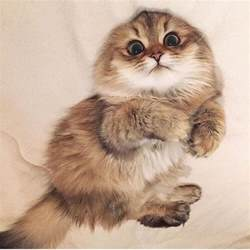 kitty cat pictures best 25 kitty cat pictures ideas on