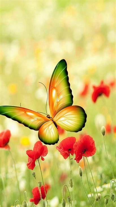 Butterfly Iphone Wallpapers Flowers Butterflies Pretty Nature