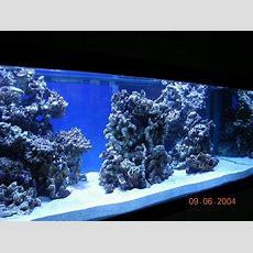 Reef Aquascaping Designs  Google Search Aquarium