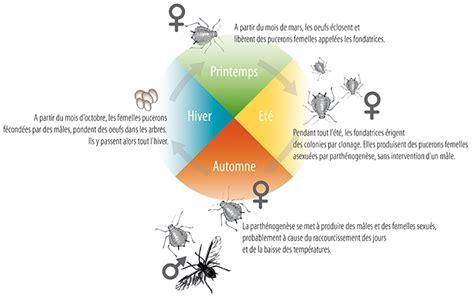 la parthenogenese chez les insectes synthese passion