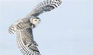 35 Lovable Collection of Owl Wallpapers   Naldz Graphics