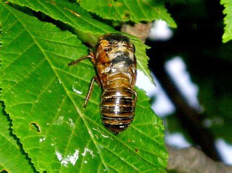 cicada scrapbook may 2004