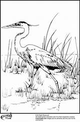 Stork Coloring Pages Bird Teamcolors Colors Getcolorings Print Bookmark Url Title Read Printable sketch template