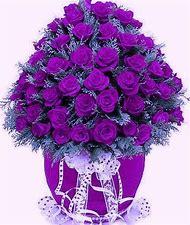 Purple Rose Arrangements