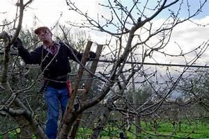 Kirschbaum Richtig Schneiden : kirschbaumschnitt darauf sollten sie beim schneiden achten ~ Frokenaadalensverden.com Haus und Dekorationen