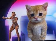 Miley Cyrus Cat