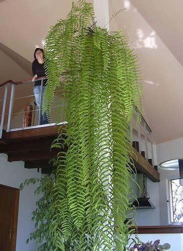 plante verte interieur sans lumiere plante d interieur sans lumiere photo de fleur une pensee fleuriste