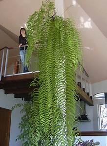 Grande Plante Verte : grande plante d int rieur pas cher photos de magnolisafleur ~ Premium-room.com Idées de Décoration