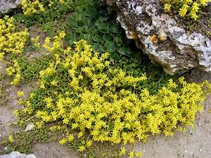 Free Images : rock, meadow, flower, summer, herb, yellow ...