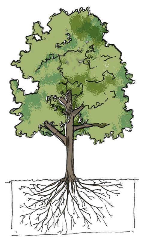 L'arbre En Ville, Découvrez Un Outil Au Service Des