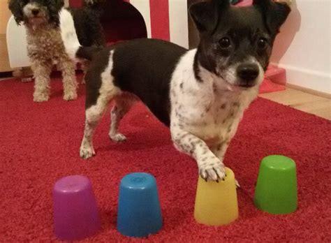 becher gedaechtnistraining fuer hunde donnar dog toys