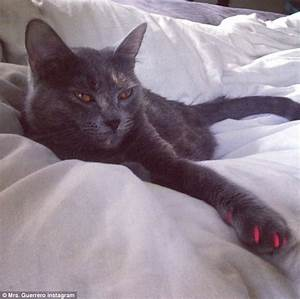 Soft Paws cats dogs sport bright glitter claws prevent scratching furniture
