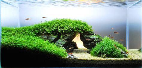 Setup Aquascape by Amazing Iwagumi Tank Images Aquascape Paludarium