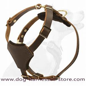 Puppy Cute  Puppy Harnesses