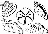 Coloring Shell Sea Coloring4free Seashell Illustrations Source Actually Solution Those Vectors Clipart Short Perfect sketch template