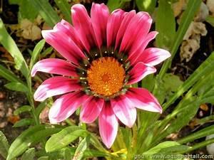 Plantes à Suspendre : plante annuelle d finition et explications ~ Premium-room.com Idées de Décoration