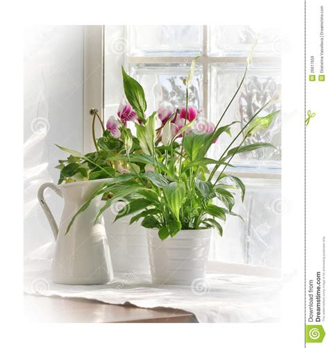 Flowers For Windowsill by Flowers On Windowsill Stock Image Image Of Windowsill