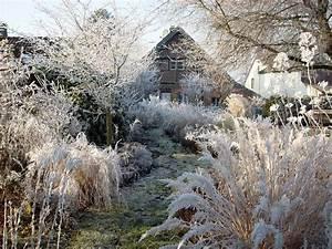 Blumen Im Winter : pin von claudia auf blumen und garten im winter garten privatgarten und staudengarten ~ Eleganceandgraceweddings.com Haus und Dekorationen