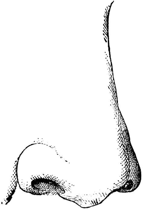 nose clipart  clipartioncom