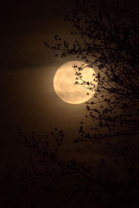super moon  hiding   beautiful moon moon