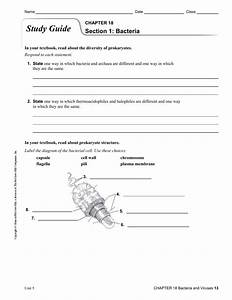 Bacteria  Viruses  Protist And Prions Study Guide