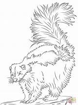 Skunk Coloring Pages Printable Cute Realistic Skunks Drawing Animals Crafts Bible Cartoons Select Nature Many Category Woodland Popular Categories sketch template