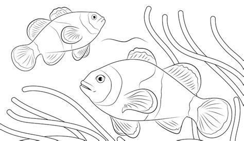 gambar mewarnai ikan di laut belajarmewarnai info