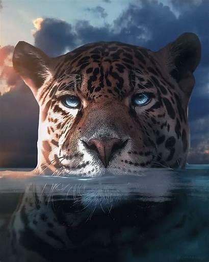 Animals Jaguar Animal Wild Cat Animais Eyes