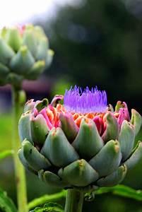 Edible, Ornamental, Plants, For, Your, Garden