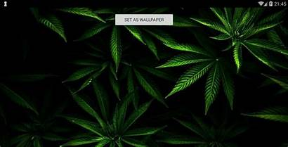 Weed Marijuana Wallpapers Cannabis Backgrounds Android Descripcion