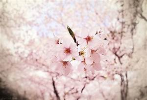 blossom, cute, flower, flowers, photography - image ...