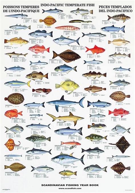 info pacific fish poster chart  cold water fish