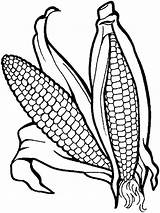 Corn Coloring Vegetables Pages Vegetable Garden Colour Templates Fruits Print Books Printable Printables Veggies Recommended Kaynak Ie Google Mycoloring sketch template