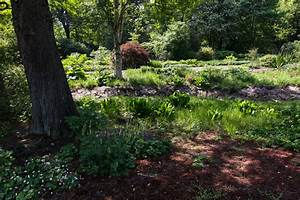 Schattenpflanzen Stiftung Bremer Rhododendronpark