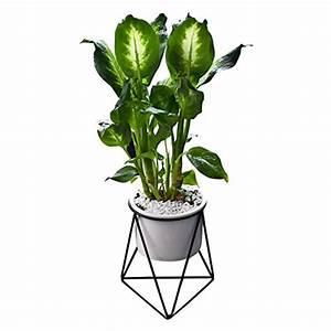 Pflanzen Zum Aufhängen : gartenausstattung von fastar g nstig online kaufen bei ~ Michelbontemps.com Haus und Dekorationen