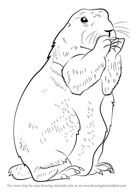learn   draw  prairie dog rodents step  step