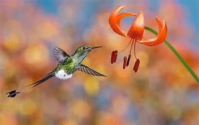 Bird Amazing Wallpapers Photographs Desktop
