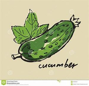 Hand drawn cucumber stock vector. Illustration of natural ...